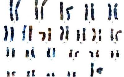 DNA-onderzoek uitgelegd